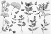 Botanical Illustrations example image 3