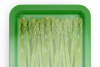 Plastic Tray With Asparagus Mockup example image 8