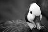 Bird black-white photo 12 example image 1