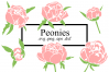 Peonies SVG example image 1