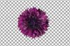 Cornflower watercolor clip art pack, bachelor's button example image 18