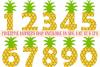 Huge Pineapple Bundle SVG, DXF, AI, EPS, PNG, JPEG example image 3
