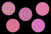 Pink and Gold Glitter example image 3