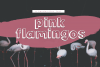 Pink Flamingos - Handwritten Bubble Font example image 1