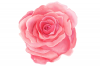 6 Digital Watercolor Roses | Clip Art Illustrations PNG/JPEG example image 2