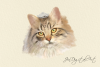 CATS | 20 Assorted PNG Clip Art Illustrations example image 6