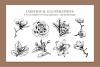 Botanical Illustration Bundle example image 6