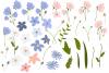 Blue Peach Daisy Flowers Sublimation Transfer Clipart Bundle example image 4