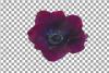 Anemone watercolor clip art pack, watercolor anemone design example image 5