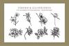 Botanical Illustration Bundle example image 5