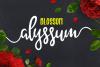 Alyssum Blossom example image 1
