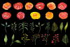 Watercolor Flowers Clipart Bundle Orange Red Yellow Florals example image 4