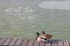 Lakehouse - Fancy Script Font example image 3