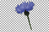 Cornflower watercolor clip art pack, bachelor's button example image 12