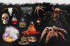 Halloween overlays, Pumpkin, Raven, Cat, Spider, Backdrop example image 8