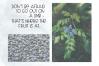 Blueberry Shake - Handwritten Font example image 4