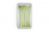 Plastic Tray With Asparagus Mockup example image 3