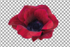 Anemone watercolor clip art pack, watercolor anemone design example image 4