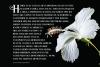 Hibiscus example image 3