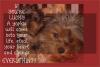Dorkie Yorkie - A Handwritten Playful Font with BONUS SVG example image 4