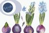 Watercolor Hyacinth Clip Art Set example image 1