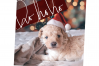 Christmas Words and Phrases - Overlay Font example image 9