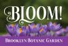 Hibiscus example image 8
