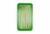 Plastic Tray With Asparagus Mockup example image 7