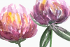 Watercolor Summer Clover Clip Art Set example image 3