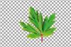 Anemone watercolor clip art pack, watercolor anemone design example image 22