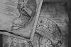 Dark Anatomy Digital Paper example image 2