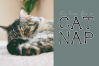 Cats and Dogs - A Cute Handwritten Font example image 9