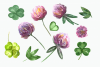 Watercolor Summer Clover Clip Art Set example image 4