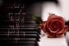 Nattallia Modern Feminine Script example image 4