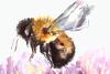 Watercolor Bumblebee & Clover Clip Art + Print example image 2