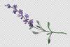 Bouquet summer breeze lavender watercolor png example image 4