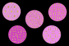 Pink and Gold Glitter example image 2