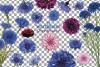 Cornflower watercolor clip art pack, bachelor's button example image 2