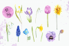 Watercolor Early Spring Flowers Clip Art Set example image 2